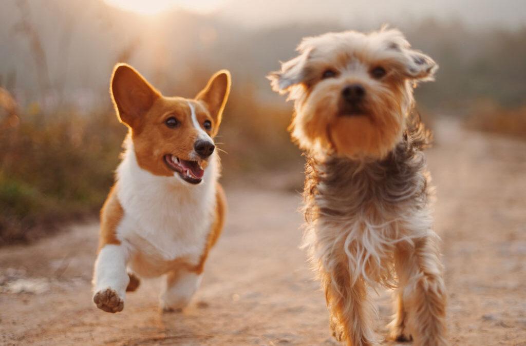 Atenciones y urgencias para mascotas, aumentan considerablemente durante cuarentena.